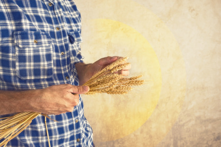 Male Farmer holding wheat straws  Agricultural Crop protection concept  Stock Photo