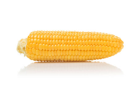 developed: Beautiful fully developed Corn Cob with golden seed over white background.  Stock Photo