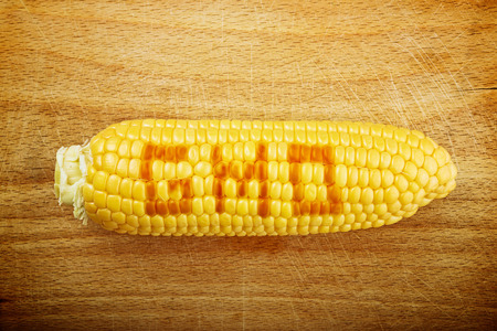 developed: Beautiful fully developed GMO Corn Maize Cob with golden seed on wooden backgrpund