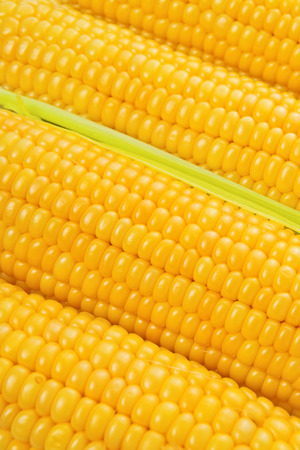 american cuisine: Corn Cob with golden seed as american cuisine background