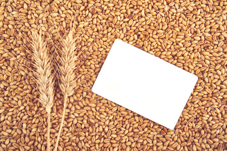 Wheat grains and ears and blank business card as agricultural background for harvesting season