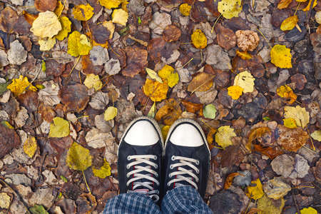 Standing in dry autumn leaves, entering the fall season. photo
