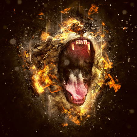 angry lion: Lion, the King of beasts and the most dangerous animal of the world.