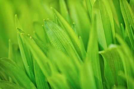 grassplot: Beautiful Green Spring Grass Macro Shot with Selective Focus and Shallow Depth of Field.