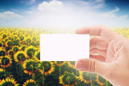biodiesel plant: Agricultural Farmer Holding Blank White Business Card in Sunflower Field as Copy Space for message or Design. Stock Photo