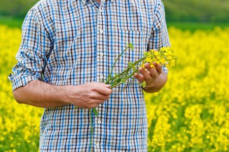 rappi: Male Farmer Standing in Oilseed Rapeseed Cultivated Agricultural Field Holding Canola Flowers for Examining and Controlling The Growth of Plants, Crop Protection Agrotech Concept.