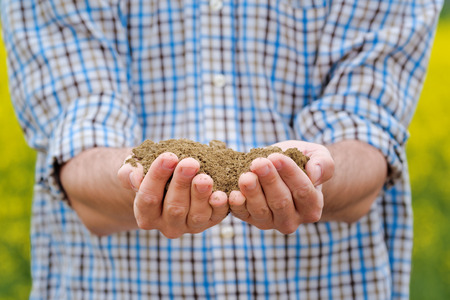 fertile land: Male Farmer Examines Soil Quality on Fertile Oilseed Rapeseed Agricultural Farm Land Stock Photo
