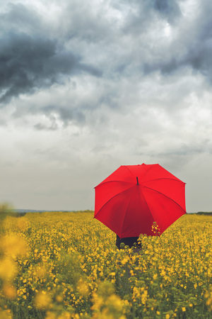 lluvia paraguas: Persona con paraguas de pie en rojo semilla oleaginosa de colza Campo Agrícola como Crop Protection Agrotech Concept, enfoque selectivo con poca profundidad de campo