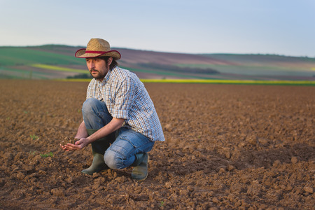 agricultural farm land: Male Farmer Examines Soil Quality on Fertile Agricultural Farm Land, Agronomist Checking Soil in Hands