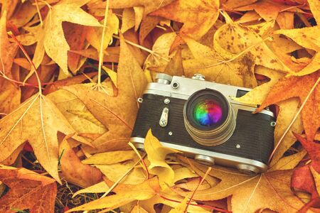 photographic camera: Vintage Analogue Photo Camera in Dry Maple Leaves as natural background