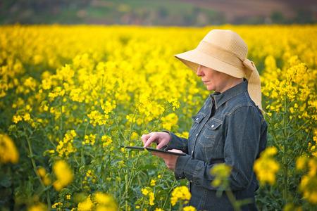 agricultor: Agricultor femenina usando Digital Tablet PC en la semilla oleaginosa de colza cultivada Campo Agrícola Examinar y controlar el crecimiento de las plantas