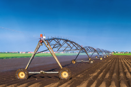 agriculture: Automated Farming Irrigation Sprinklers System in Operation on Cultivated Agricultural Field on a Bright Sunny Summer Day