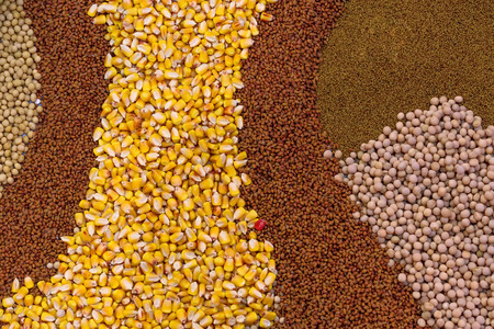 oilseed rape: Various Agricultural Crop Seed as Abstract Full Frame Textured Background