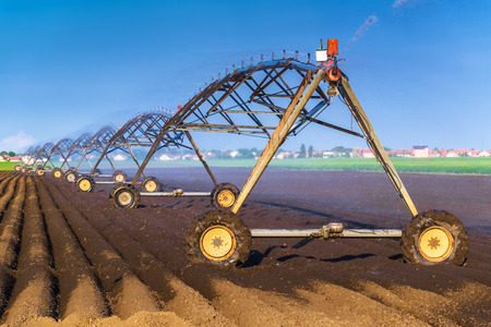 irrigation equipment: Automated Farming Irrigation Sprinklers System in Operation on Cultivated Agricultural Field on a Bright Sunny Summer Day