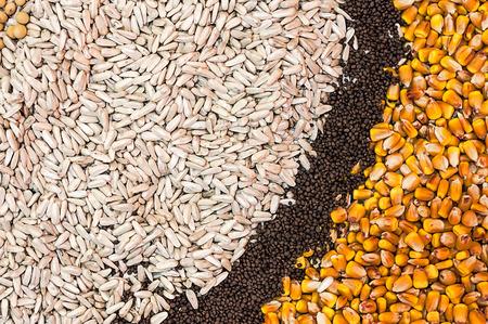 seeds of various: Various Agricultural Crop Seeds