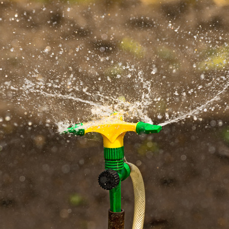 crop sprayer: Plastic Home Gardening Irrigation Sprinkler in Operation on Cultivated Agricultural Garden Stock Photo