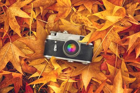 arbre vue dessus: Appareil-photo vintage analogique Photos dans Maple feuilles sèches que bruit de fond naturel, Top View