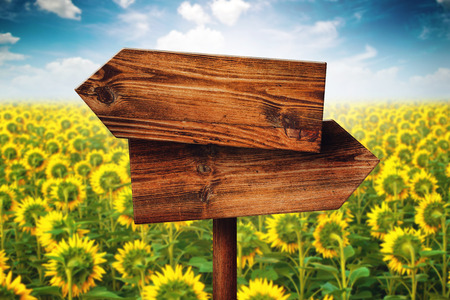 direction sign: Blank Rustic Opposite Direction Wooden Sign in Blooming Sunflower Field, Concept of Choice, Choosing Your Life Path. Stock Photo