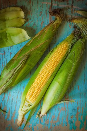 freshly picked: Freshly picked ear of maize, sweet corn cob on rustic blue wood background