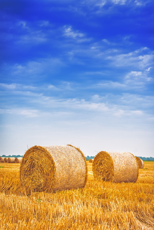 with harvest: Hay bale rolls in cultivated field after wheat harvest, cloudy summer day, vintage retro toned image Stock Photo