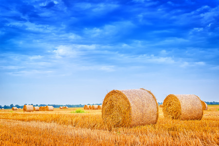 hayroll: Hay bale rolls in cultivated field after wheat harvest, cloudy summer day, vintage retro toned image Stock Photo