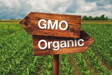 agricultura: OMG o agricultura ecol�gica Direcci�n Muestra de madera en el campo agr�cola Foto de archivo