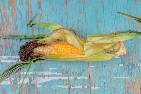 genetic food modification: Bad rotten corn ear on rustic wooden table, undeveloped maize ear, top view