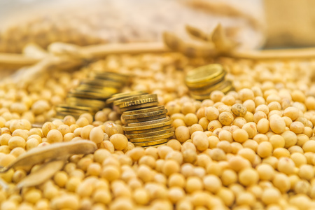 soya bean plant: Making profit from soybean cultivation, soya bean plant, pods and beans harvested in late summer from cultivated field with golden coins, selective focus Stock Photo