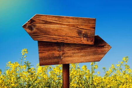 direction sign: Blank Rustic Opposite Direction Wooden Sign in Blooming Rapeseed Field, Concept of Choice, Choosing Your Life Path. Stock Photo
