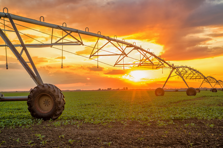 landscape rural: Automated farming irrigation sprinklers system on cultivated agricultural landscape field in sunset Stock Photo