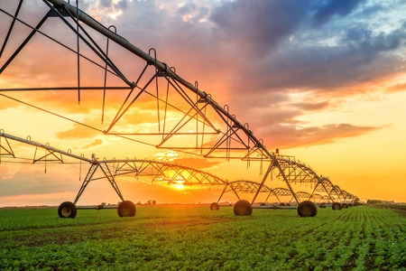Automated farming irrigation sprinklers system on cultivated agricultural landscape field in sunset Stockfoto