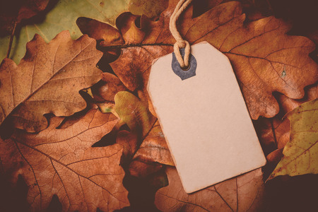 Price tag from with twine on dry autumn leaves background, autumn season sale event, Black Friday concept.