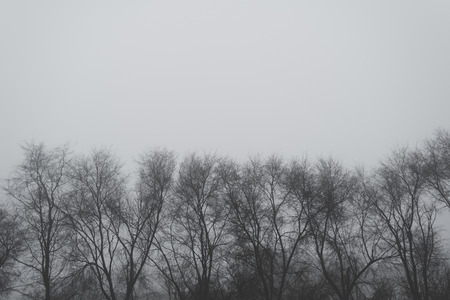 treetops: Bare treetops on winter afternoon, monochromatic image