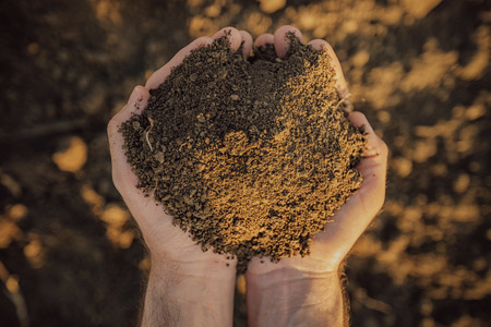 Male farmer holding pile of soil and examining its quality on fertile agricultural land, agronomist preparing land for new crop raising season, close up of hands. Stock Photo