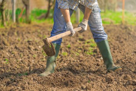 hoe: Man hoeing vegetable garden soil, new growth season on organic farm. Stock Photo