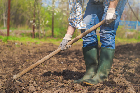 Man hoeing vegetable garden soil, new growth season on organic farm. Stock Photo