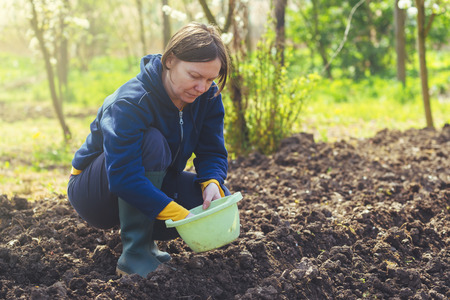 seeding: Woman seeding onions in organic vegetable garden, young adult female planting seeds in the arable soil.