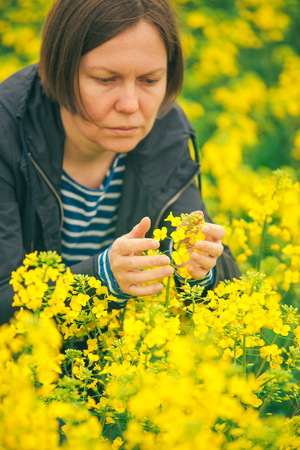 agricultural crops: Female agronomist in field of blooming rapeseed, woman controlling the growth of agricultural crops. Stock Photo