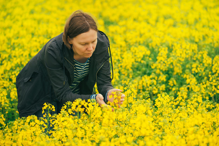 agricultural crops: Woman examining oilseed rape flower blooming, female agronomist in field of blooming rapeseed contolling the growth of agricultural crops. Stock Photo
