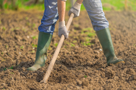 hoeing: Man hoeing vegetable garden soil, new growth season on organic farm. Stock Photo
