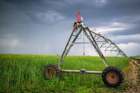 oilseed: Sprinkler irrigation system in oilseed rape field on cloudy day