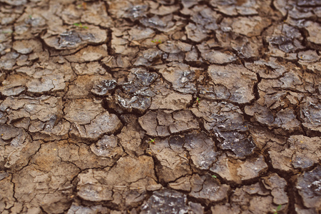 desiccation: Drought, cracks in dry cultivated land, natural texture
