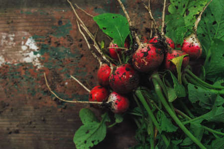 freshly picked: Freshly picked organic red radishes on wooden table, soil dirt on vegetables, selective focus