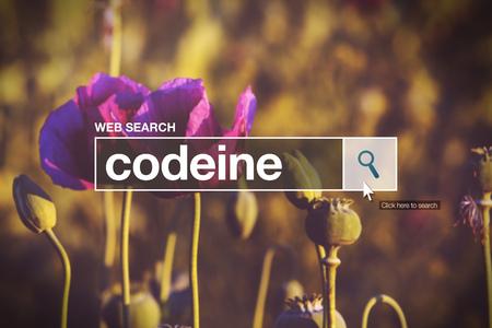 opiate: Codeine in internet browser search box, opium poppy field in background Stock Photo
