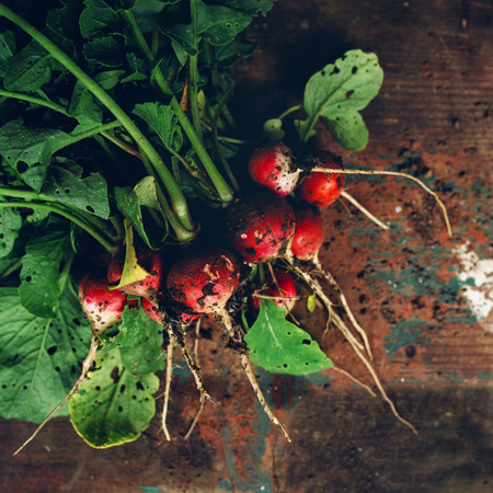 dirt: Freshly picked organic red radishes on wooden table, soil dirt on vegetables, selective focus