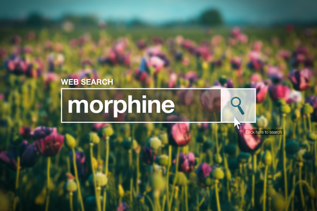 opiate: Morphine in internet browser search box, opium poppy field in background