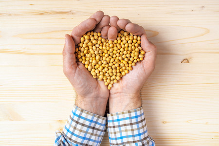handful: Handful of harvested soybeans heart-shaped pile, top view of adult caucasian male farmer holding pile of maize grains on wooden table. Stock Photo
