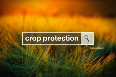 Crop protection in internet browser search box, barley field in background Stock Photo