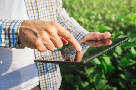 Agricultor que usa el ordenador tableta digital en el campo de los cultivos de soja cultivada, la aplicación de la tecnología moderna en el crecimiento de la actividad agrícola, la atención selectiva