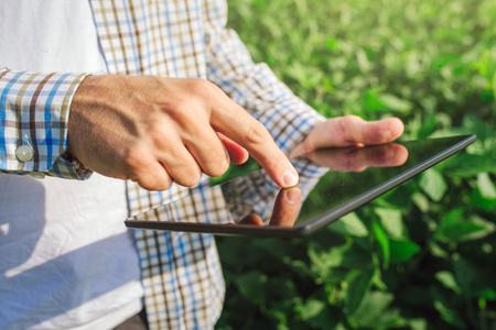 Farmer using digital tablet computer in cultivated soybean crops field, modern technology application in agricultural growing activity, selective focus 版權商用圖片 - 60148189